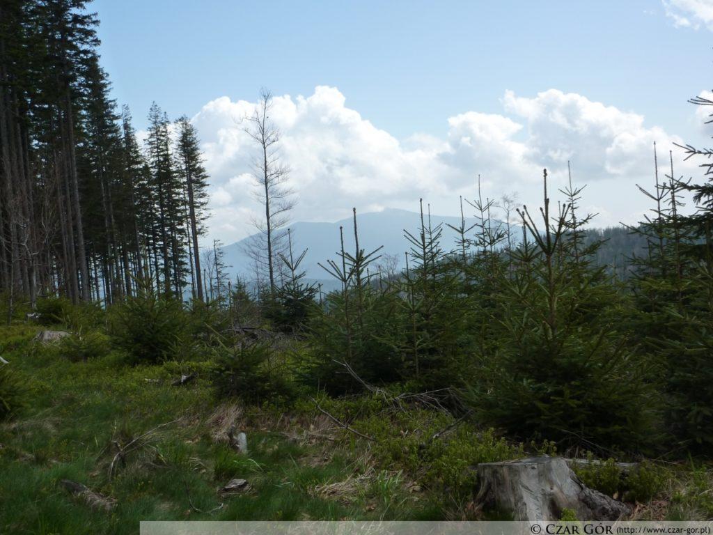 W stronę Babiej Góry. Skrzyżowanie szlaku zielonego, biegnącego na Halę Miziową, z czarnym