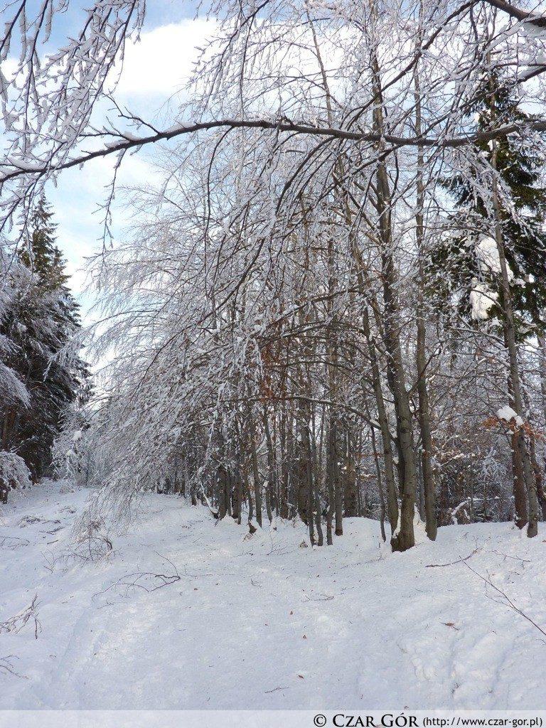 Zimą na szlaku w stronę Czantorii